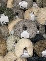 Amigurumi Chenille  Fasergehalt 100% Polyester, Brand Ice Yarns, fnt2-54859